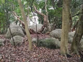 舟木石上神社巨石群