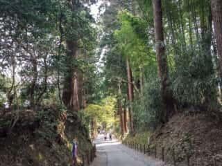 中尊寺の散歩道