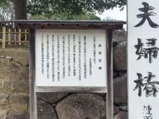 八重垣神社 連理玉椿