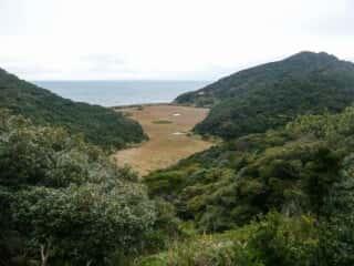 伊島の自然 湿原地帯